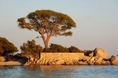 Het strand van Tamaricciu bij zonsondergang Stock Afbeelding