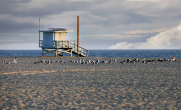 Het Strand van Venetië in Californië Stock Foto