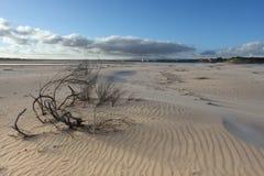 Het strand van Wendswept Stock Foto