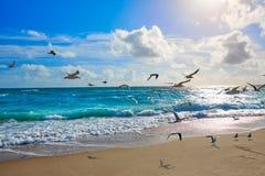Het strand van zangerIsland bij Palm Beach Florida de V.S. stock foto's