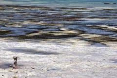 Het Strand van Zanzibar Royalty-vrije Stock Afbeeldingen