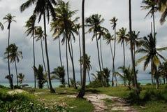 Het strand van Zanzibar stock foto