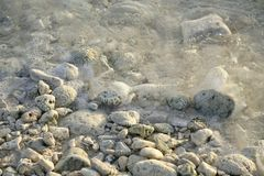 Het strandclose-up van het koraal Royalty-vrije Stock Afbeelding