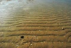 Het strandleven stock foto's