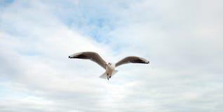 Het strandzeevogel van Bournemouth Royalty-vrije Stock Foto's