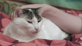Het strelen van een kat stock videobeelden