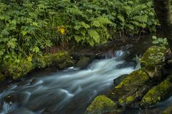 Het stromende water werd melkachtig wit door een lange blootstelling aangezien het rond groene en bruine bemoste rotsen stroomt stock foto's