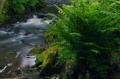 Het stromende water werd melkachtig wit door een lange blootstelling aangezien het rond groene en bruine bemoste rotsen stroomt stock foto