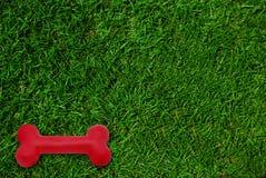 Het stuk speelgoed van de hond op groen grasgazon Royalty-vrije Stock Foto's