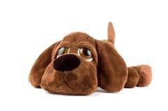 Het stuk speelgoed van het puppy Stock Fotografie