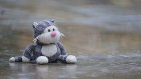 Het stuk speelgoed van zachte die kinderen kat, in een vulklei in de regen wordt vergeten stock videobeelden