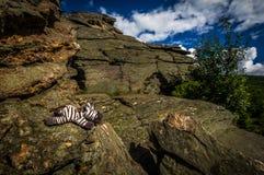 Het stuk speelgoed vulde Zebra skaly liggend op rots op Obri met donkerblauwe bewolkte hemel in Jeseniky stock fotografie