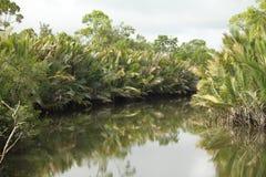 Het suan plan Lamba ` s van de Dikampungrivier zo mooi en volledig van groenachtig elke riverfront Royalty-vrije Stock Foto's