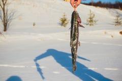 Het succes van een visser op de dag van de koude winter bovenop een bevroren meer stock fotografie