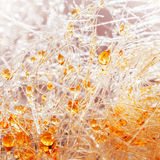 Het suikergoed -suikergoed-foss van de karamel met oranje suikerdalingen royalty-vrije stock foto's