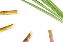 Het suikerriet, suikerrietbladeren die op witte achtergrond en exemplaarruimte worden geïsoleerd, riet, suikerriet sneed vers stu royalty-vrije stock fotografie