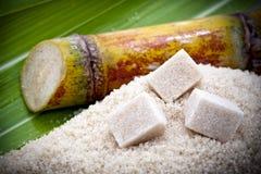 Het suikerrietinstallatie van de besnoeiing Royalty-vrije Stock Foto's