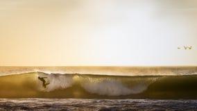 Het surfen met vogels Royalty-vrije Stock Foto