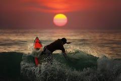 Het surfen in zonsondergangoverzees Stock Afbeeldingen