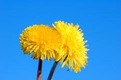 Het symbool van de lente Stock Foto