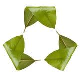 Het Symbool van het Recycling van het blad Royalty-vrije Stock Afbeeldingen
