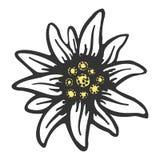Het symboolalpinism van de edelweissbloem het embleem van Duitsland van alpen stock illustratie