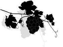 Het takje van de wijnstok royalty-vrije illustratie