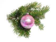 Het takje van Kerstmis Stock Foto's