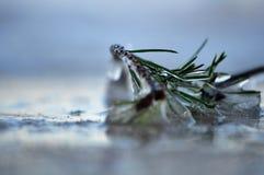 Het takje wordt behandeld door ijs op de kust stock afbeeldingen