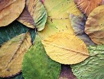Het tapijt van bladeren Stock Foto