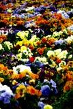 Het tapijt van de bloem Stock Afbeelding