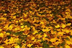 Het tapijt van de herfst Stock Afbeeldingen