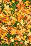 Het tapijt van de herfst. Royalty-vrije Stock Afbeeldingen