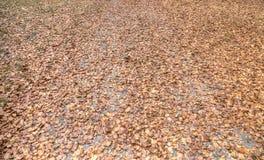 Het tapijt van de herfstbladeren Stock Foto
