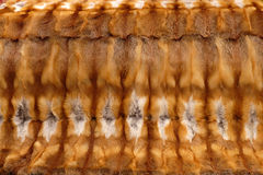 Het tapijt van de vos Stock Fotografie