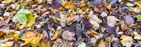 Het tapijt van multicolored bladeren Royalty-vrije Stock Fotografie