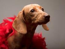 Het tarief van het puppy royalty-vrije stock afbeeldingen