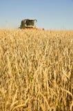 Het tarwegebied met het oogsten combineert Stock Afbeelding