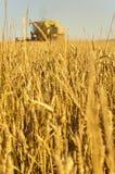 Het tarwegebied met het oogsten combineert Royalty-vrije Stock Afbeeldingen