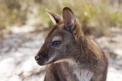 Het Tasmaanse Wild Stock Foto's