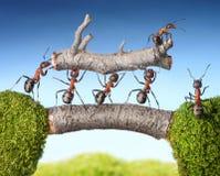 Het team van mieren draagt openings van een sessiebrug, groepswerk Royalty-vrije Stock Fotografie