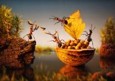 Het team van mieren legt schors met noten vast, groepswerk Royalty-vrije Stock Foto's