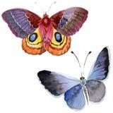 Het tedere insect van de waterverfvlinder, intresting mot, geïsoleerde vleugelillustratie stock illustratie
