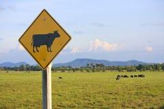 Het teken van buffels Stock Foto's