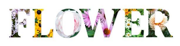 Het teken van de bloemencollage van echte bloemenfoto's wordt gemaakt die Botanische doopvont royalty-vrije illustratie