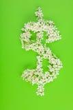 Het teken van de dollar dat van witte witte bloemen wordt gemaakt Stock Fotografie