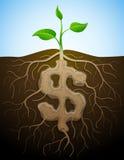 Het teken van de dollar wordt getoond als wortel van installatie Stock Afbeelding