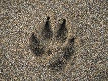 Het teken van de hondenpoot op nat zand bij het strand stock afbeelding