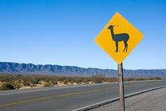 Het Teken van de lama in de Andes Stock Fotografie
