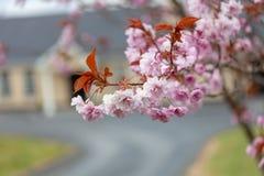 Het teken van de lente royalty-vrije stock fotografie